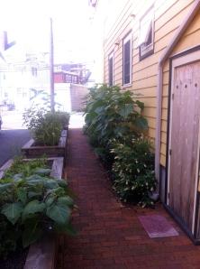 9 joseph planters